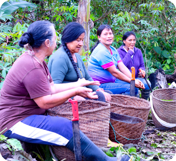 Chocolates Tsatsayaku | Chocolates Ecuador | Chocolate Amazónico